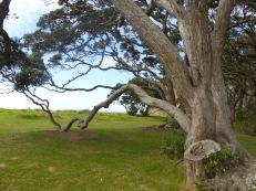 Fantastic trees in Wendeholm Park